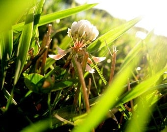 shine down // nature // Olathe, KS // sunlight // grass // spring