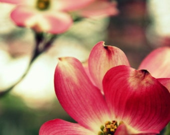 pretty in pink // Overland Park, KS // flowers // outdoors // spring // pink // nature // fine art print