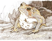 Yellow Toad