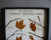 Vintage Tree Specimen Collection