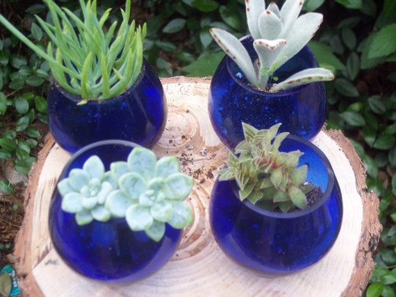 Succulents for Centerpieces and Gift Give Aways
