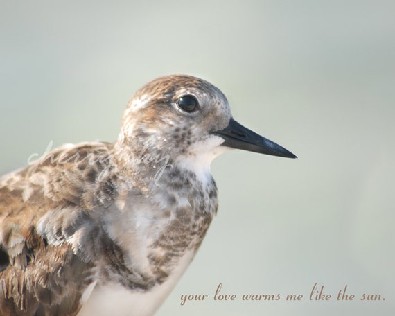 Your Love Warms Me - Sand Piper Beach Ocean Shore Bird Sweet Quote Sea Grey Brown Beige Cottage Decor Minimal Close Up Photograph