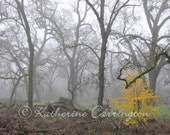 Splash of Yellow - 8x10 Color Print Nature Autumn Fine Art Photography - Other Sizes Avalable