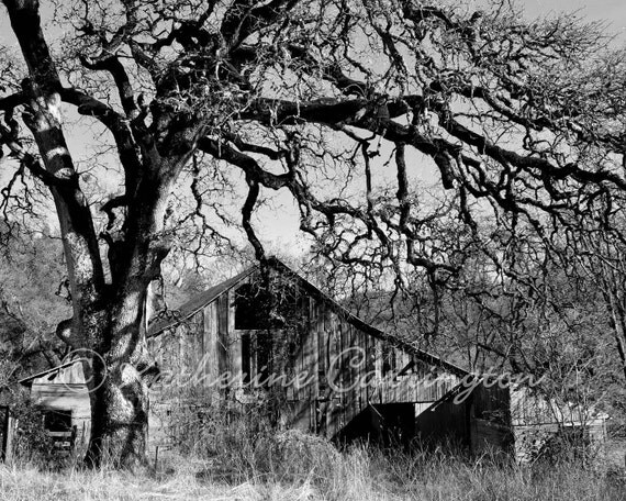 Abandoned Barn - 8x10 Black and White Architecture Fine Art Photography - Other Sizes Avalable