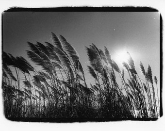 Blowin' in the Wind, Black and white darkroom print