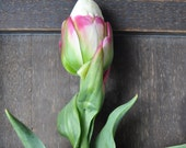 Tulip Photo - Spring Decor Flower Print - makelifeparadise