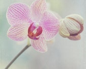 Pastel Purple Pink Orchid Floral Shabby Chic Mother's Day Gift Photography Print