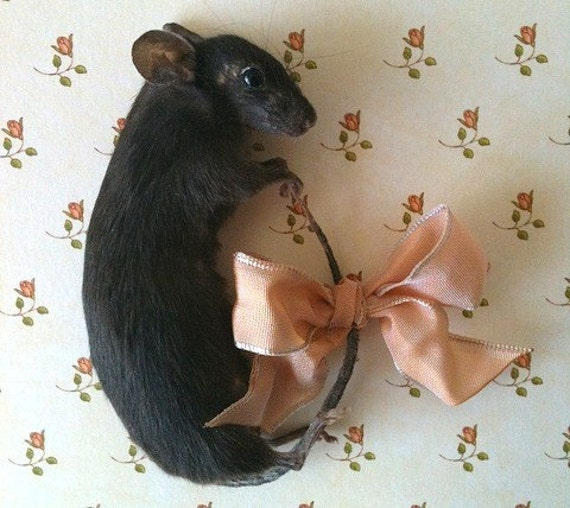 This Item Is Reserved.......Taxidermy Black Mouse Brooch