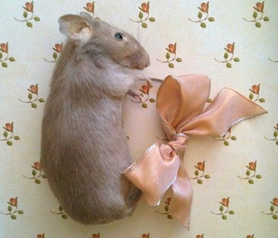 Taxidermy Tawny Brown Mouse Brooch