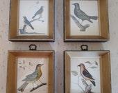 vintage retro set of four bird audubon framed prints