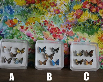 Miniature Wonderful Butterfly Collection