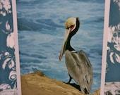 Brown Pelican - Five Card Set