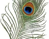 peacock feather - digital ilustration
