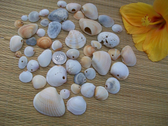 Natural Florida seashells 50 craft sea shell beads with naturally made drilled holes jewelry supplies coastal beach decor