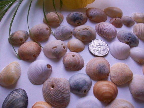 50 natural sea shell beads naturally made drilled holes Florida craft seashells coastal beach decor jewelry supplies