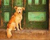 Street Dog in front of Green Door in Quetzaltenango, Guatemala - Fine Art Photography Print