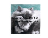 cat, Birman, painting, teal, gorgeous