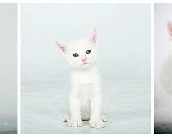 Set of 3.... Little white Kitten