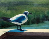 Charleston Gull - yellowdoorart