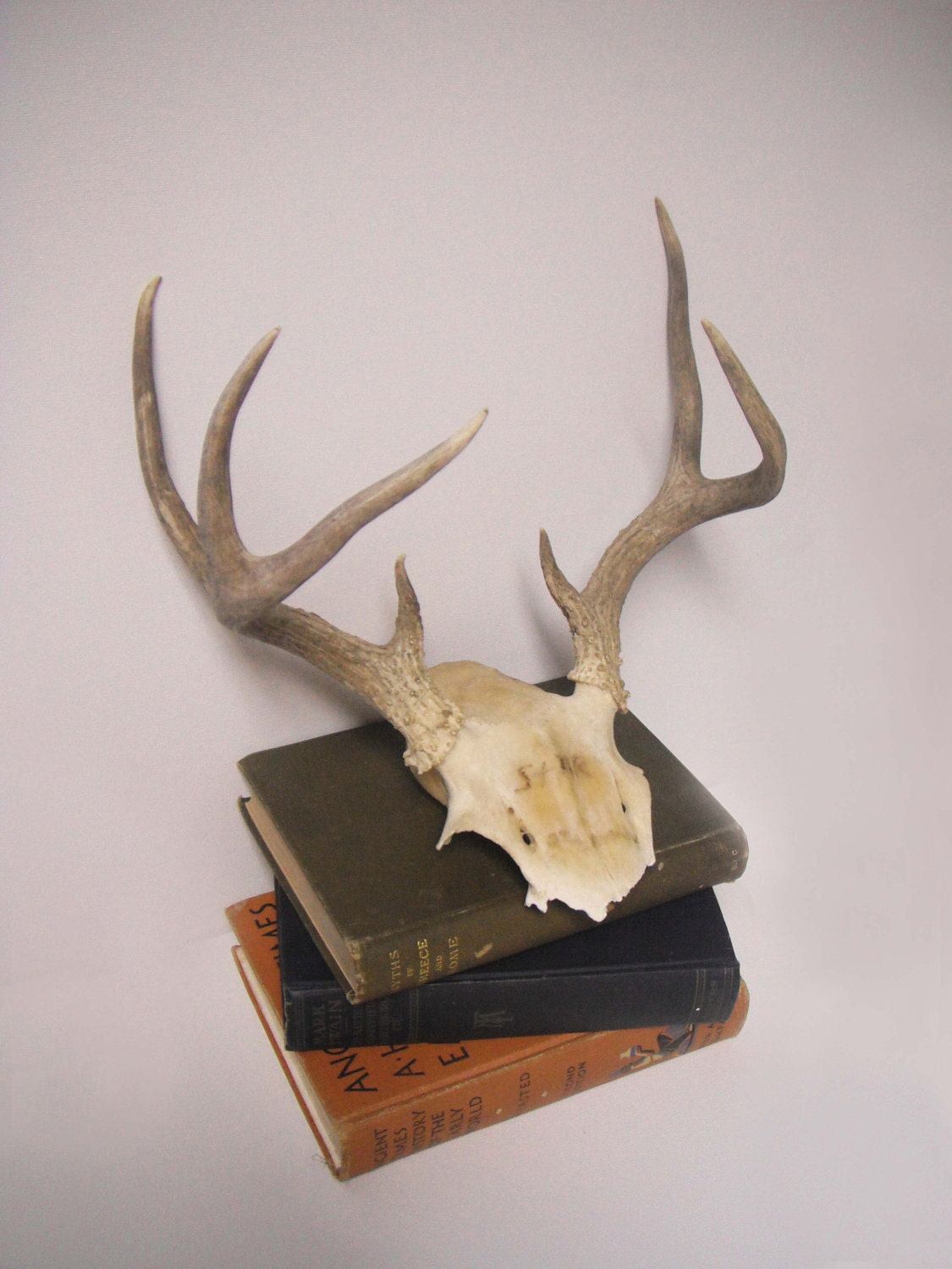 Vintage 7 point deer antler skull wall decor by kikivintage for Antler wall decor