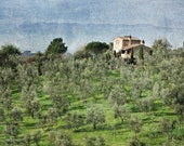 Tuscan Olive Grove - Tuscany Photography, fine art print, vintage decor, 8x12 photo, wall print, home decor