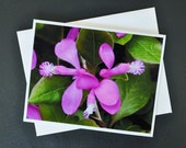 Wildflower Photo Note Card Fringed Polygala