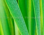 Blades of Grass 11x14