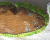 The eat and sleep Guinea Pig