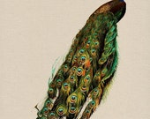 Peacock Feathers Digital Download Vintage Fabric Transfers For Pillows Clothing Tea Towels Tote Bags Paper Crafts  No. 27