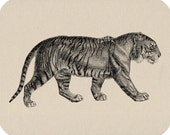 Bengal Tiger Download Vintage Image Transfers For Pillows Clothing Tea Towels Tote Bags No. 63