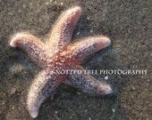 Fine Art Print 8x10 - Starfish