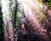 Wooded Morning Sun Rays on Rhodedendrons Foggy Walk in the forest mystical Photograph 5x7 - Putterpaws