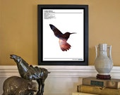 Cosmic Humming Bird: Zoological Universe Series - Scientific Discovery Style 8x10 Giclée Art Print
