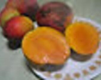 Grafted Mango Tree Varieties- Haden,Kent,Bombay,Alphonso,Keitt,Glenn,Bailey's Marvel,Valencia Pride,Pim Seng Mum,Nam Doc Mai