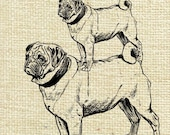 Animal Dogs Pug Altered Digital Image Download Transfer To Pillows Tea Towels Cushion No.6