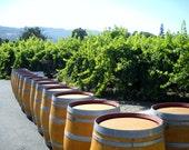 Photography Wine Barrels California Wine Country READY to SHIP Napa Vineyard Landscape 11x14 Home Decor