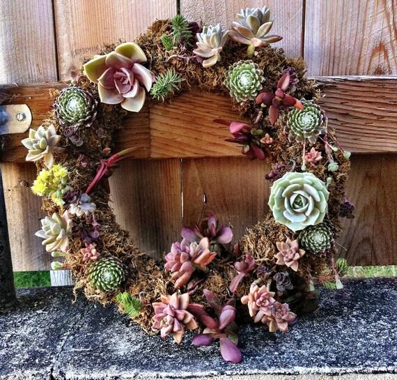 living Succlent wreath