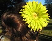 Bright green w/ yellow petal tips gerbera daisy large hair alligator clip