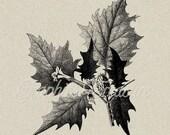 Diables Weed plante collage numérique feuille victorienne illustration No.41 téléchargement instantané
