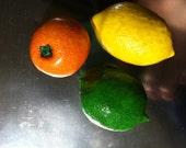 Citrus Trio Magnets