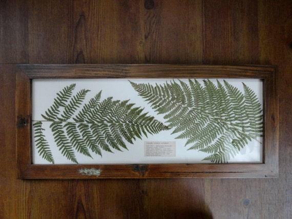 Pressed Male Fern Botanical in Handmade Frame