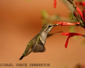 Winter Sale 8x10 Fine Art Print - Humming Bird Print A Must Have For Your Home Or Office.