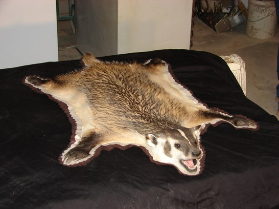 Real Badger Rug or Wall Hanging