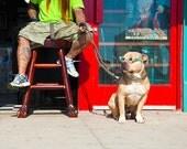 Travel Photography, Coolest Dog in Venice // Venice Beach, California, USA // 11x14 print