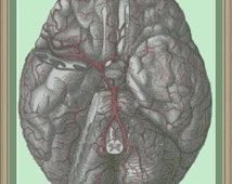 Arteries of the brain: cross-stitch pattern