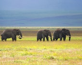 Elephants, Tanzania. Art Photography Print.