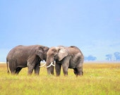 Elephants, early morning. 5x7 Art Photography Print.