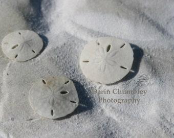 Fine Art Photography -Sand Dollars on Beach