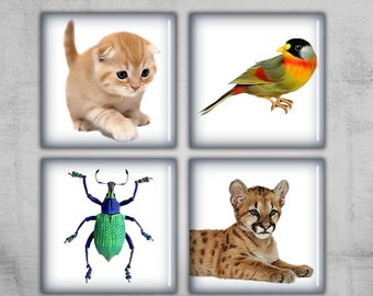 1x1 inch Digital Collage Sheet - Square Images for jewelry pendants, magnets or scrapbooking - instant download -  ANIMALS