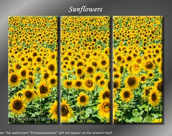 Framed Huge 3 Panel Canvas Art Flower Fields Sunflowers Giclee Canvas Print - Ready to Hang